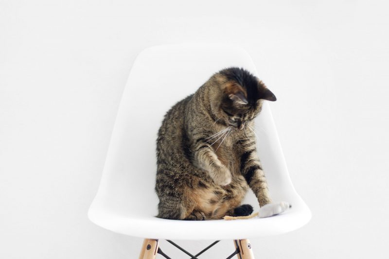 Hanging a Bell on the Cat