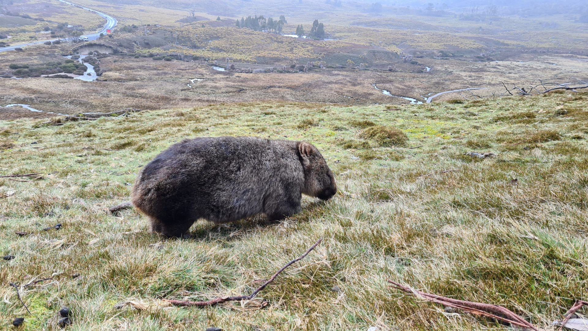 Learn English with the News – Wombats' Deadly Bums