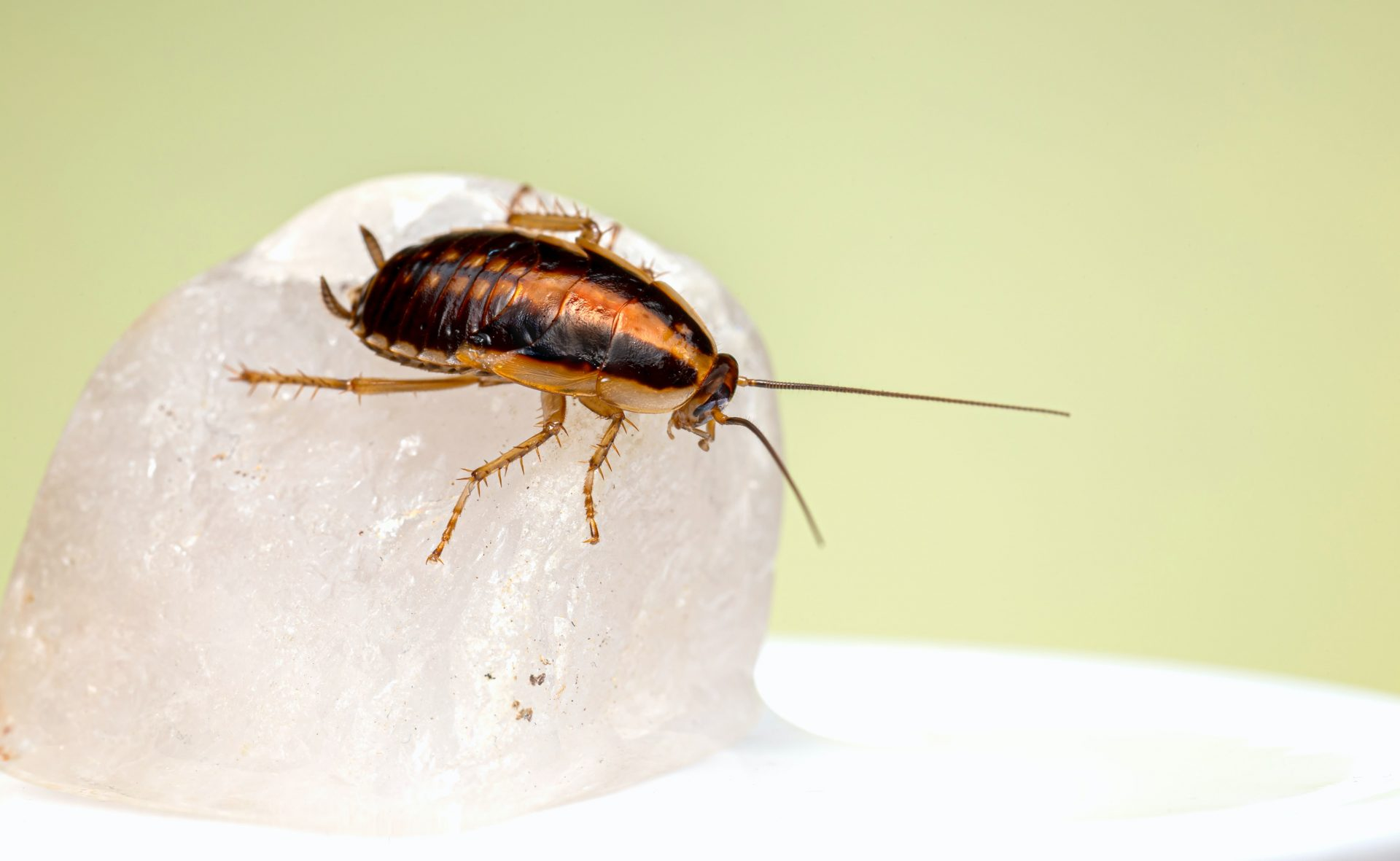 Cockroach Disaster   English Vocabulary Challenge